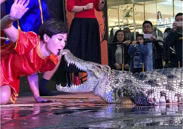 山东美女与鳄鱼相伴23年,不怕的就来